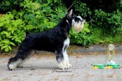 LV JMVA Dog-Othos Sombra